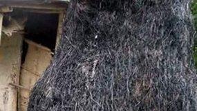 দক্ষিণ সুরমার মানিকপুর গ্রামে পূর্ব বিরোধের জের ধরে খড়ের ফেইনে আগুন দিয়েছে প্রতিপক্ষ
